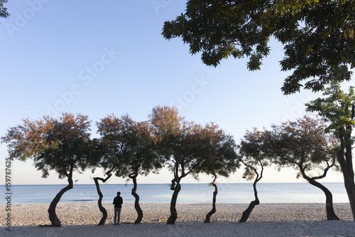 Fotografie, Obraz  kumsaldaki ağaçlar