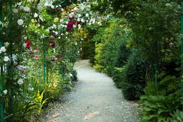 FototapetaRose Garden Path