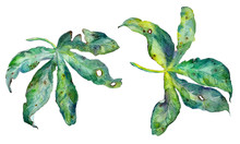 Abstract Watercolor Exotic Passiflora Leaves Isolated On White.