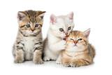 Fototapeta Child room - Drei Kätzchen
