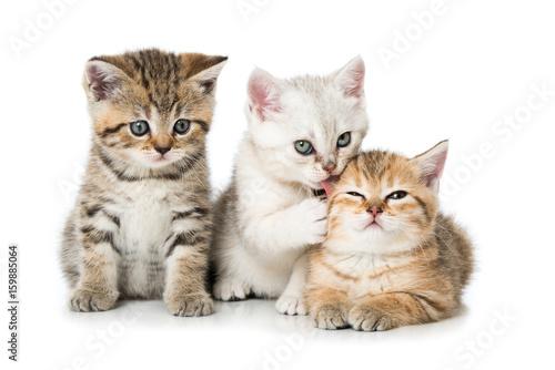 Vászonkép  Drei Kätzchen