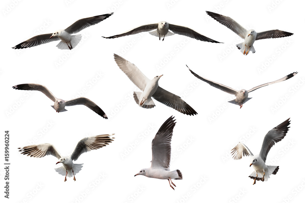 set of seagulls.