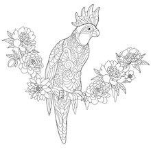 Coloring Page Of Cockatoo Parr...
