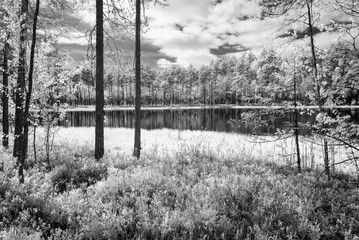 Fototapetaforest lake in hot summer day. infrared image