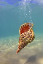 Seashell Falling Underwater - ...
