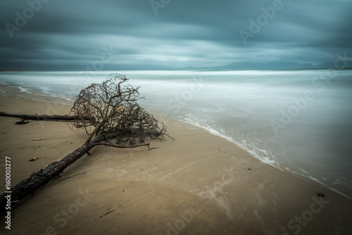 Long exposure with a fallen tree laying on the beach Fototapet
