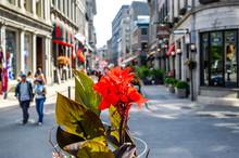Red Flower On Popular St Paul ...