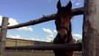 Head of brown horse and wooden fence. Beautiful horse, harness, horse muzzle. Clouds on blue sky rural scene. Horse waving mane