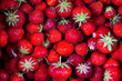 canvas print picture - Frische Erdbeeren auf schwarzem Hintergrund