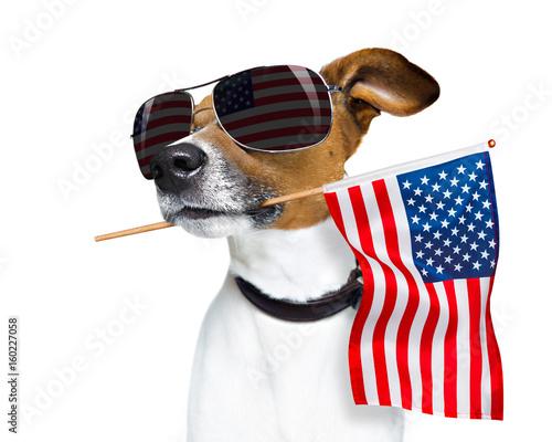 Fotografie, Obraz  independence day 4th of july dog