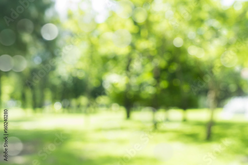Fototapeta blur natural and light background in the park. obraz