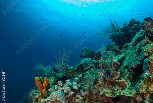 Tuinposter Koraalriffen coral formations on the reef around Grand Cayman have taken centuries to grow. This abundant ecosystem is enjoyed by scuba divers who marvel at the natural beauty of the underwater caribbean world