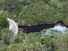 Forest - Karori Wildlife Sancu...