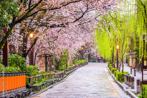 Gion Shirakawa, Kyoto, Japan in spring.