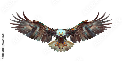 painted a flying eagle on a white background front Fototapeta