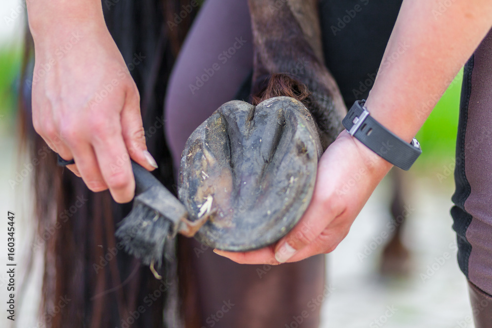 hoof care on a brown horse leg