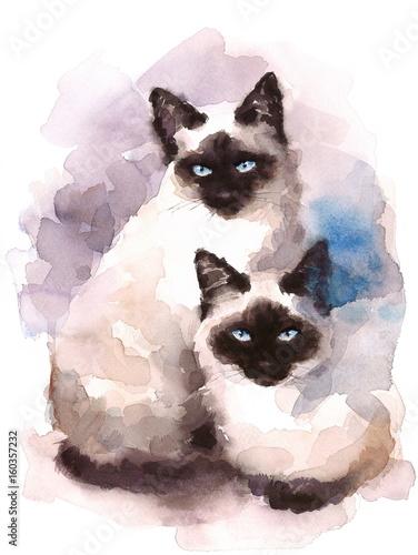 Fotografie, Obraz  Siamese Cats Watercolor Hand Painted Pet Portrait Illustration