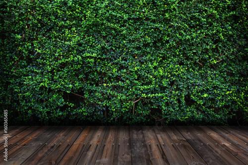 Cuadros en Lienzo Green leaves wall with wood floor.