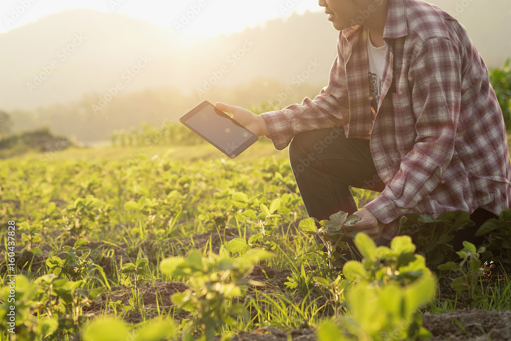 Fototapety, obrazy: Farmer man read or analysis a report in tablet computer on a agriculture field with vintage tone on a sunlight,agriculture concept.