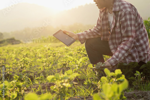 Farmer man read or analysis a report in tablet computer on a agriculture field with vintage tone on a sunlight,agriculture concept Canvas Print