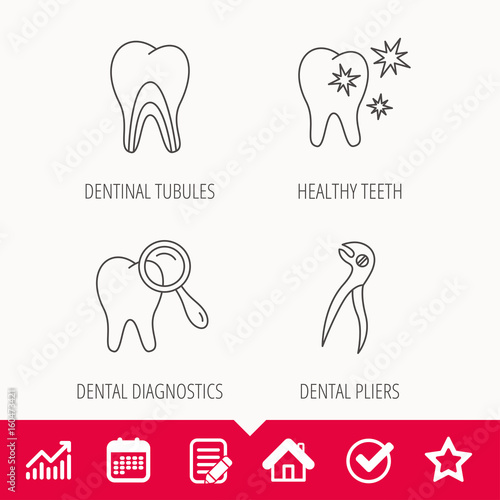 Healthy teeth, dentinal tubules and pliers icons. Dental diagnostics linear sign. Edit document, Calendar and Graph chart signs. Star, Check and House web icons. Vector #160473421
