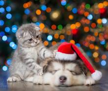 Playful Kitten And Sleepy Pupp...