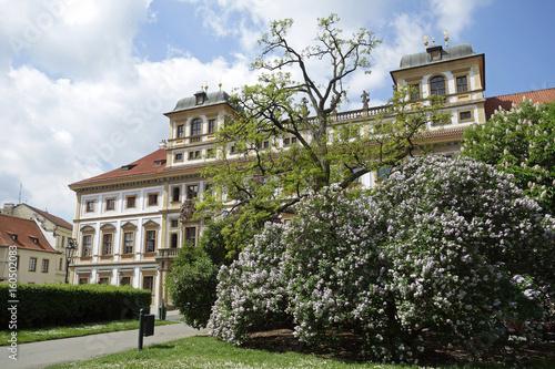 Fotografie, Obraz  Prager Burg im Frühling