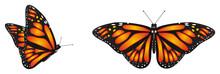 Butterfly, Monarch, Wings, Fly...