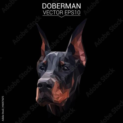 Fotografia Doberman dog animal low poly design