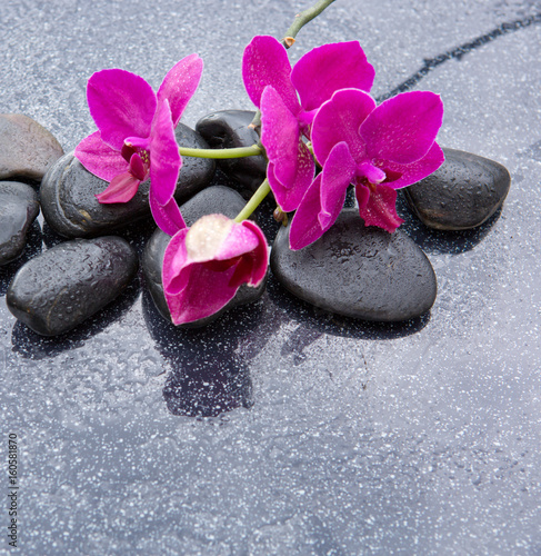 Photo sur Toile Bestsellers Pnk orchids and black stones close up.