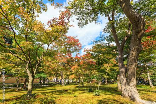 Autumn garden tree in Golden Pavilion Kinkakuji Temple at Kyoto, Japan Poster Mural XXL