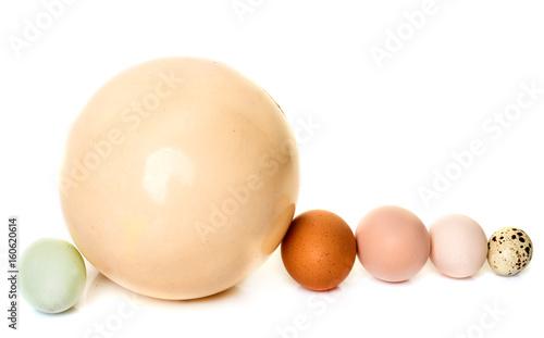 eggs in studio