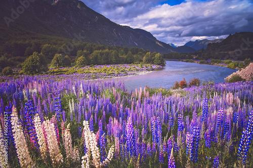 Staande foto Noord Europa Chilean Patagonia landscape