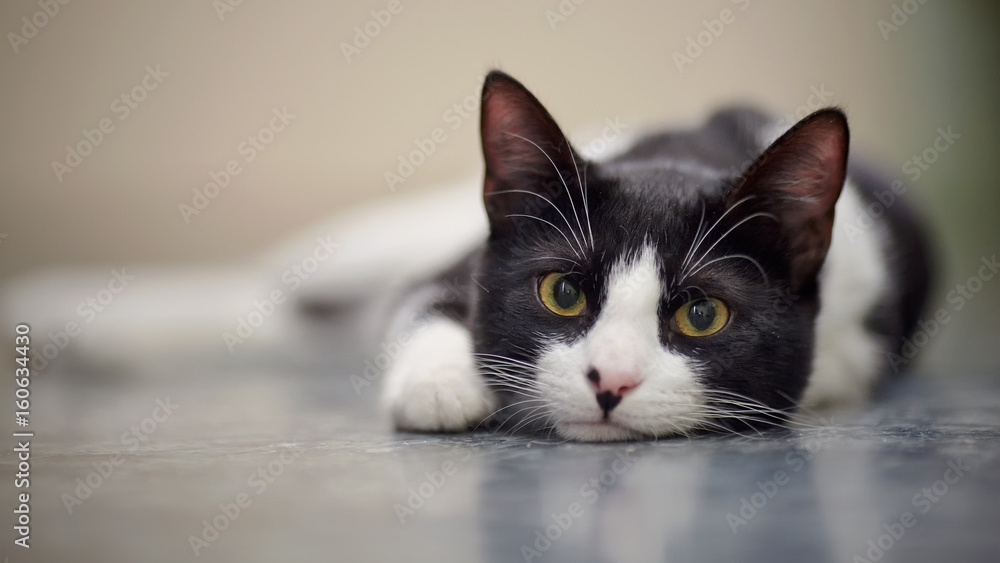 Fototapeta Portrait of a sad cat black and white color
