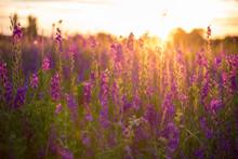 Wonderful Sunset. Fantastic Co...
