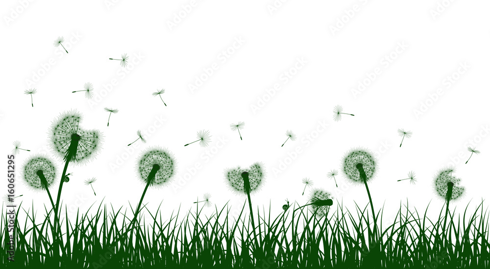 Fototapety, obrazy: Green grass silhouettes with dandelion flowers, vector illustration.