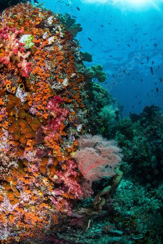 Fototapety, obrazy: Reef Scene