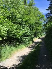 Fototapeta na wymiar path in the woods