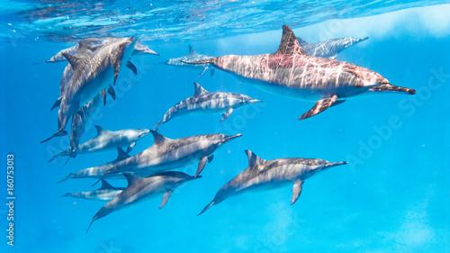 In de dag Dolfijn Delfin Schule im Roten Meer