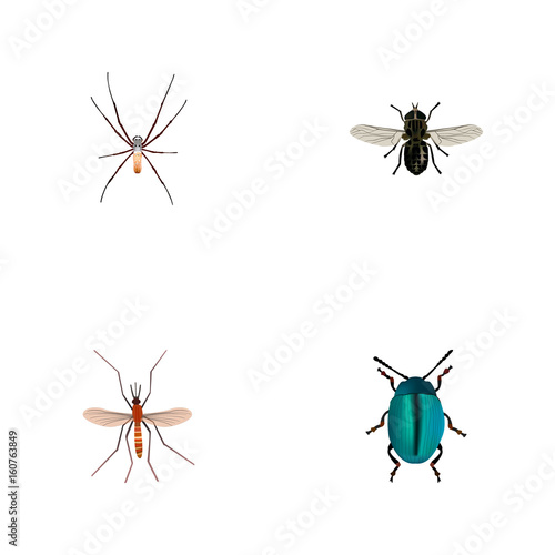 Realistic Gnat, Midge, Bug And Other Vector Elements  Set Of