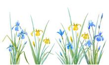 Watercolor Iris Flowers Vector Composition