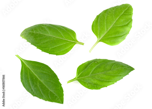 Photo basil herb leaves isolated on white background closeup