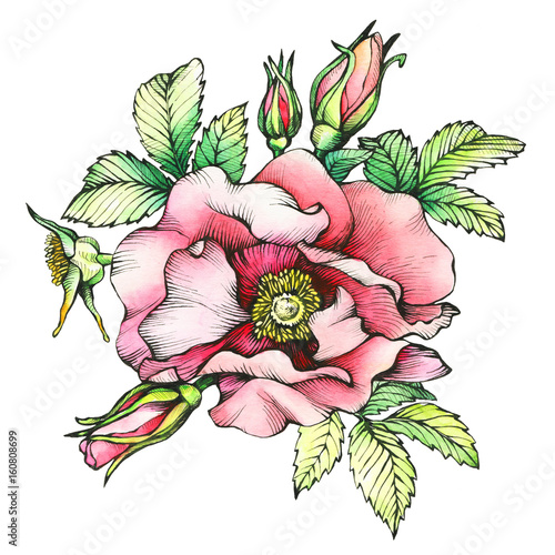 Graphic the branch flowering dog rose (names: Japanese rose, Rosa