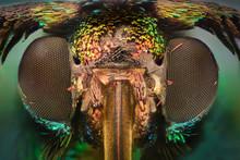 Extreme Magnification - Colored Daytime Moth, Procridinae