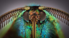 Extreme Magnification - Colored Daytime Moth, Procridinae