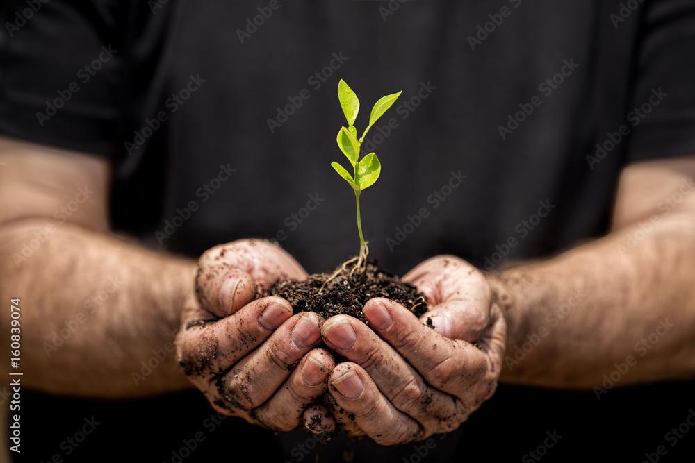 Fototapeta Young plant on hand
