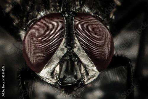 In de dag Macrofotografie Fly on Steel