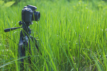 Photo Camera On A Tripod Stands In A Green Field In The Summer. Nature, Concept, Vacation, Hobby, Creative Work