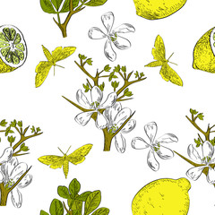 FototapetaVector drawn citrus seamless pattern on white background with butterflies and flowers in a sketch style. Exotic collection.