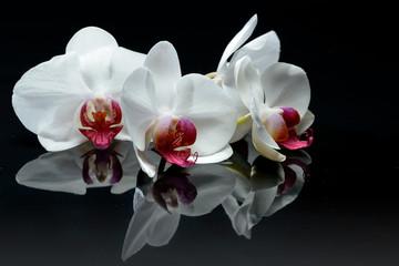 Obraz na Szkle Japoński Orchid flowers on black